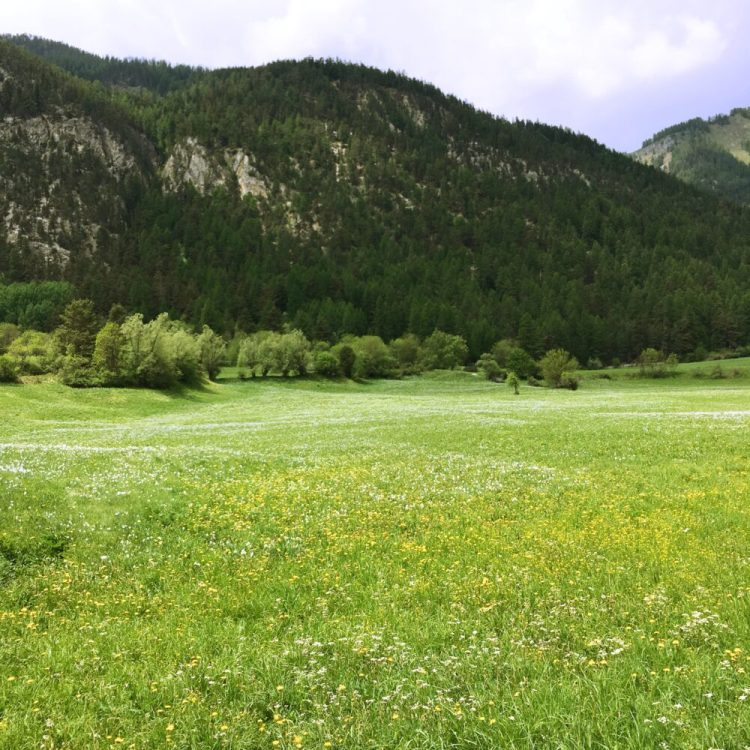 The meadows of the Vallée de la Clarée in the French Alps during spring time