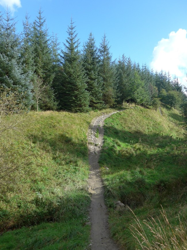 Part of the red route at Gisburn Forest MTB trails