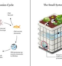 aquaponics diagram diy aquaponics free engine image for  [ 1280 x 822 Pixel ]