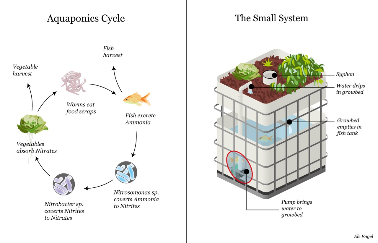 hight resolution of aquaponics diagram diy aquaponics free engine image for