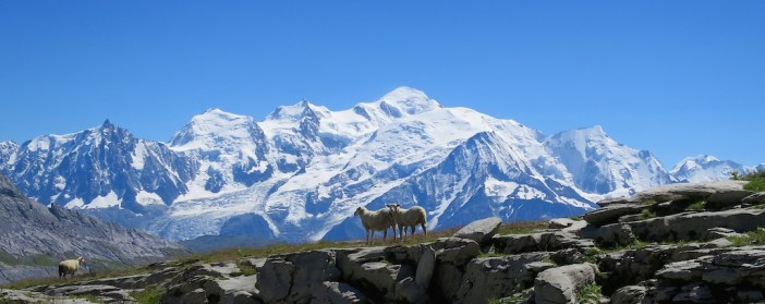 Sheep and Mont Blanc