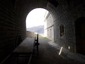 Peeking through the gate