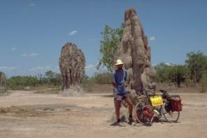 termites complex