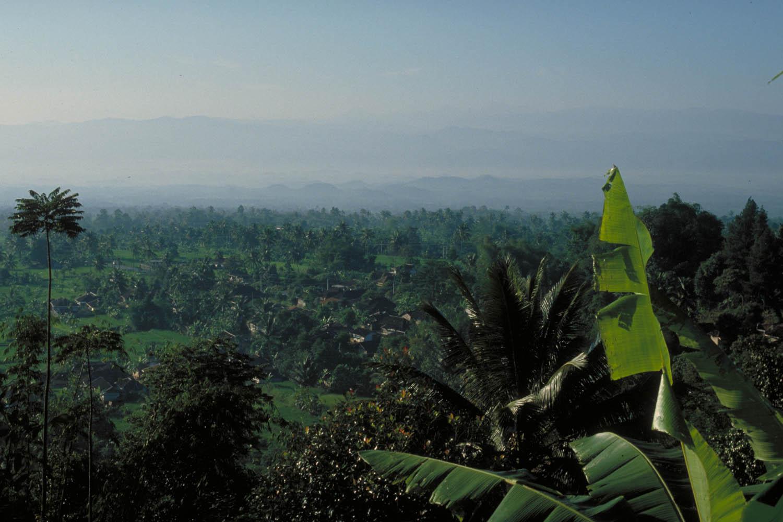 tropical views: palm trees and banana leaves