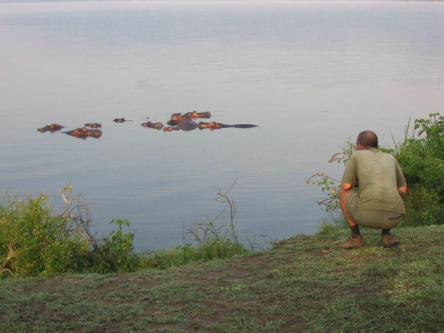 hippos near the campsite