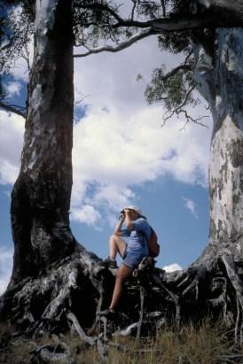 Spotting a kangaroo?