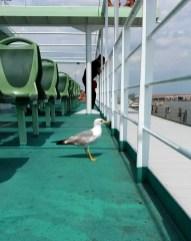Gabbiano on Boat