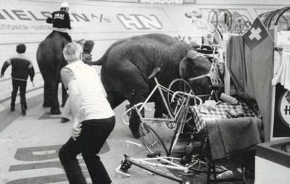 Elefanter i Forum