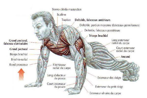 La Musculation Gnrale Sans Appareillage Cyclisme