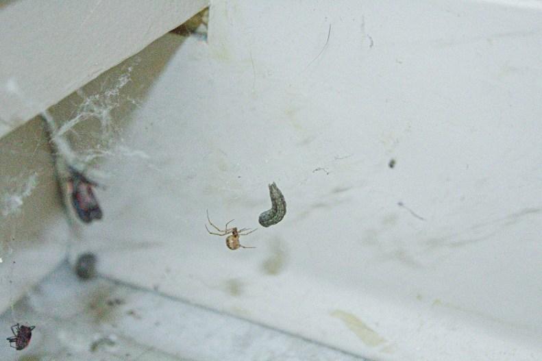 Bathroom-Spider-2021-03-29-0010