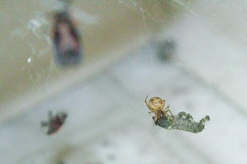 Bathroom-Spider-2021-03-30-0043