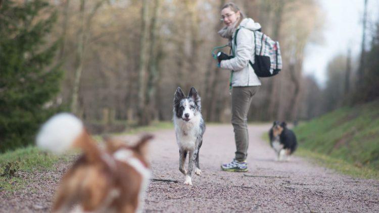 Trois chiens en balade