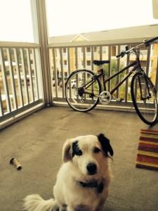 dog-on-balcony