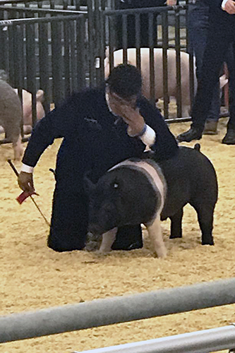 Jersey Village High School sophomore Jose Lopez drops to one knee and gets emotional after it was announced he placed second in swine's class three in judging at the CFISD Livestock Show Association Show and Sale on Feb. 8. This was his first year showing an animal and Lopez said he was amazed at the recognition for raising his pig, which he named Pumbaa. (CFISD courtesy photo)