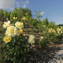 Léto v trojské botanické zahradě (3)