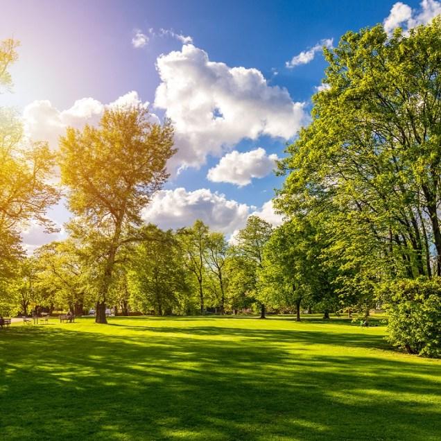 Spring,View,In,Letna,Park,,Prague,,Czech,Republic.,Spring,In