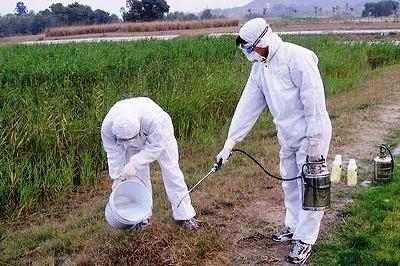 散歩中に大群に襲われる事件も! 日本上陸「猛毒ヒアリ」……中国で爆発的に繁殖していたの画像3
