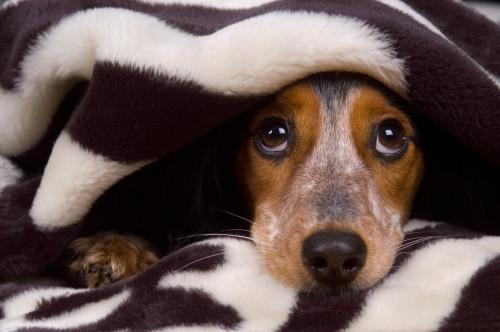 Mascotas nerviosas y tiempo de aseo