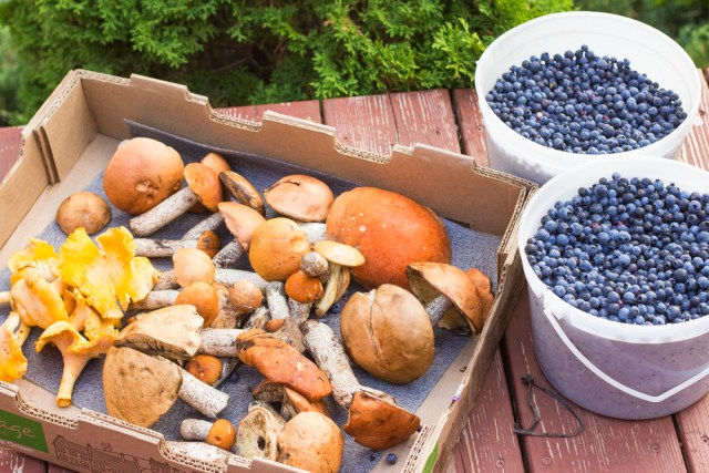 Blueberry and mushrooms 0021