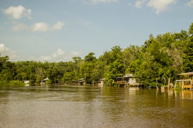 swamp lifehomes0283