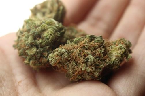 weed-cannabis