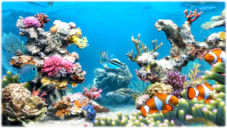 Tropical Ocean 3d Live Wallpaper Sim Aquarium Virtual Aquarium Screensaver And Live