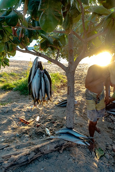 Catch of the Day, Taganga, Colombia, 2017