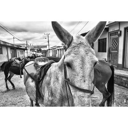 Mules block the road in Murillo, Colombia.