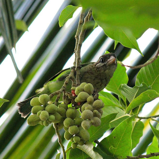 Bird Plants & Animal Watching