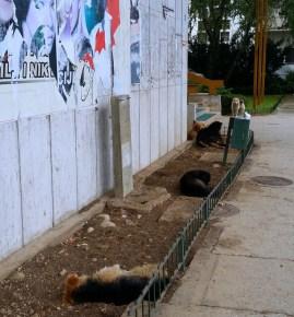 Hunde flüchten vor Regen