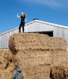 schapenboerderij Texel lammetjesboerderij schapen lammetjes boerderij uitje-11