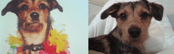 Hot Dog of the Month: Penny