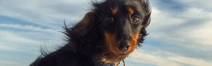 Hot Dog of the Month: Pippa