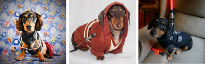 The Weenie Awakens! #StarWeens