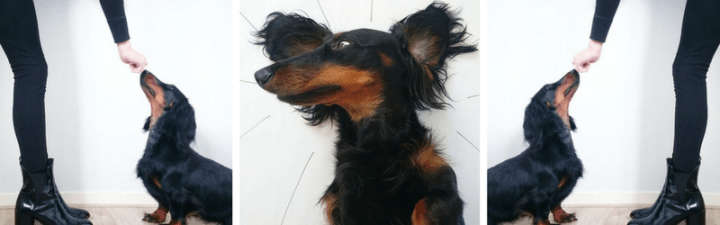 Why I Crate Trained My Dachshund