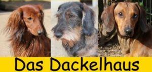 Forum für Dackel : Dackelhaus