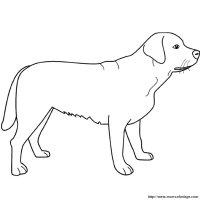 Colorare Cane, disegno labrador in piedi