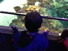 Monster at the National Aquarium, Feb 2014
