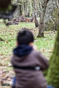 Kid 1.7 à l'approche des cerfs dans la forêt sauvage de l'Espace Rambouillet (D.Stankovski)