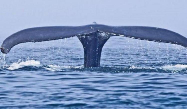 ο_άνθρωπος_που_έμεινε_στην_κοιλιά της φάλαινας_για_τρεις_μέρες_