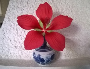 fiore dell'albero della palude (effimero: 24 h)
