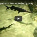 😍 S.E.A. Aquarium at Sentosa Review 💓 ฉบับเต็ม by #DaddyThumb 👍 #คุ้มค่ากับการรอคอย