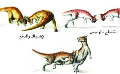 عندما تتناطح الدينصورات في تنغير