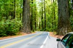 California Redwood Forests - Copyright Dadtography