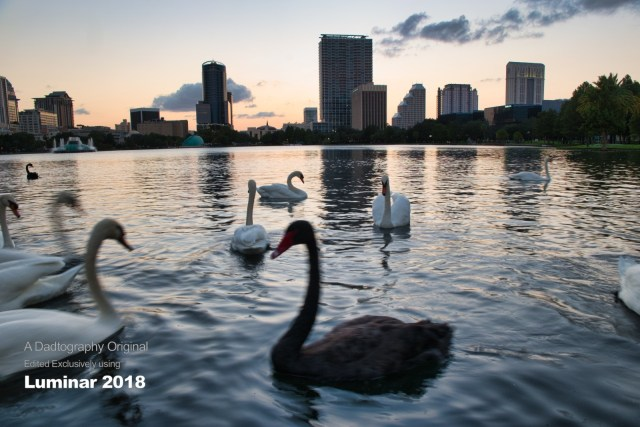 Swans at Lake Eola - Luminar 2018 Edit