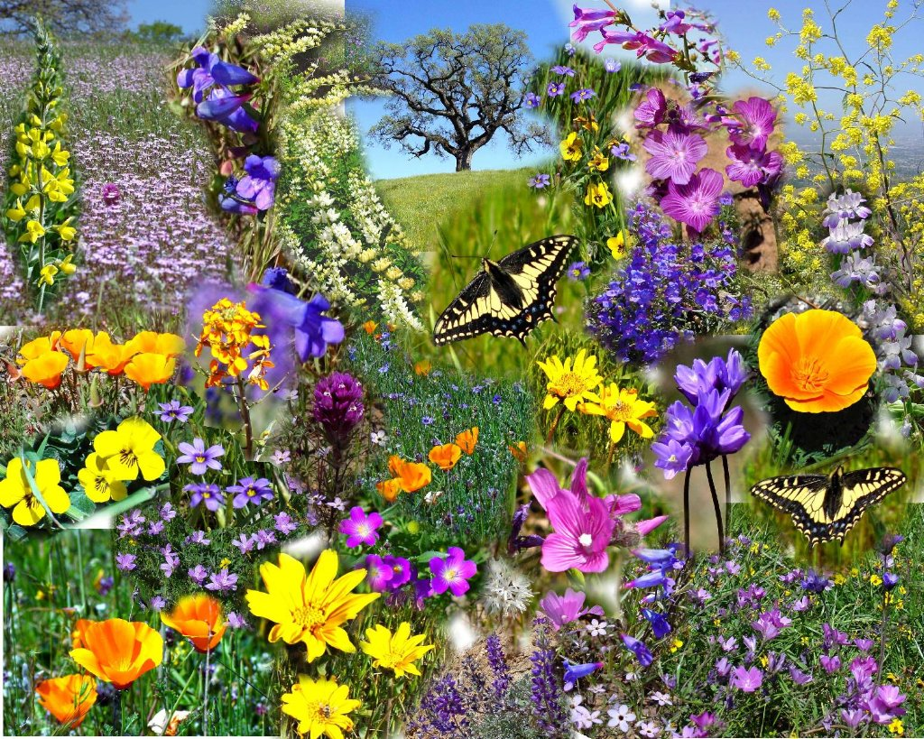 https://i0.wp.com/www.daemery.com/images/collage/01-05%20Spring%20Flowers%20web.jpg