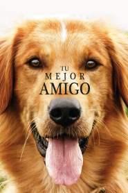 La razón de estar contigo – Latino HD 1080p – Online
