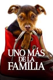 Mis huellas a casa – Latino HD 1080p – Online