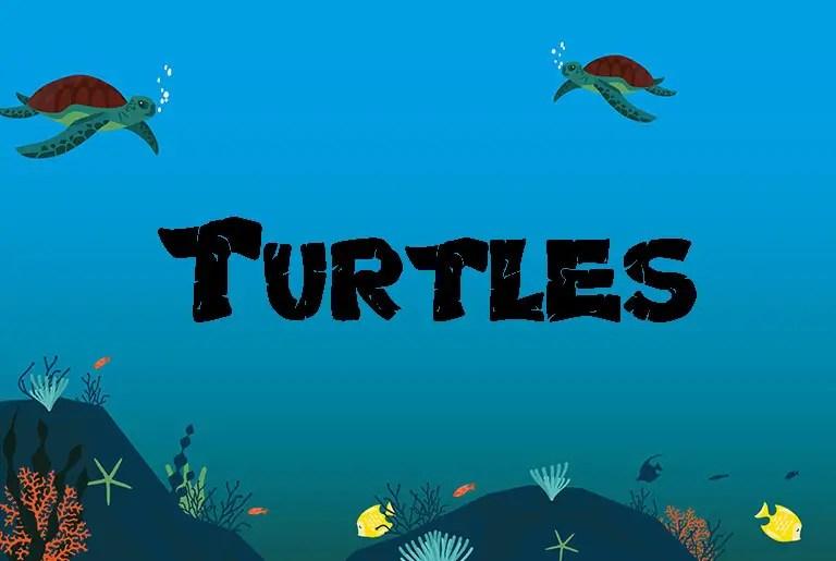 Turtles Fancy Font -1