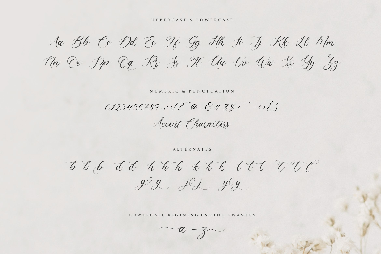 Claytona Modern Calligraphy Font -3